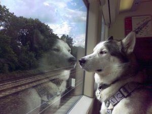 Как перевозить домашних животных на поезде Премиум